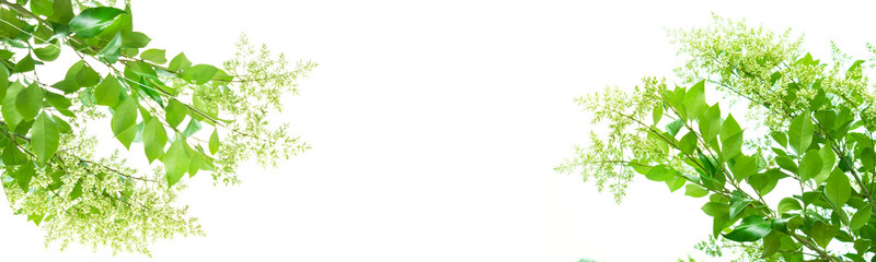 싱그러운 초록이미지 Fotobehang