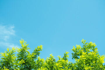 싱그러운 나뭇잎과 하늘 Fotobehang