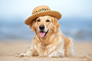 happy golden retriever in a summer straw hat on the beach
