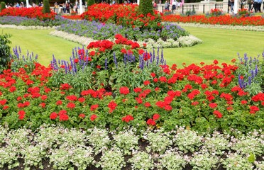 Flower decorative garden.