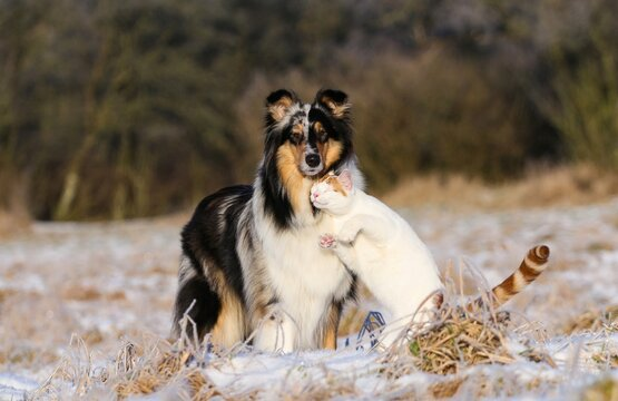 Portrait Of Dog Standing With Cat On Field During Winter