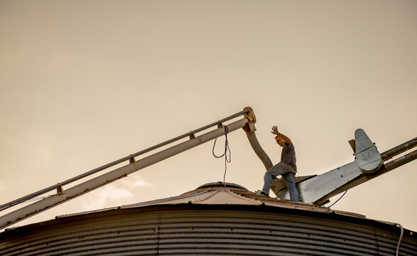 Farmer unloading his harvest of corn in silo to dry in an agricultural setting.
