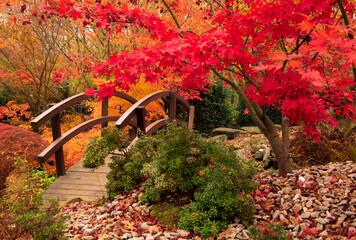 Fototapeta W japońskim ogrodzie kolorową jesienią obraz