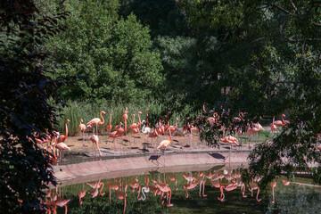 flamingi ptaki woda drzewa sadzawka