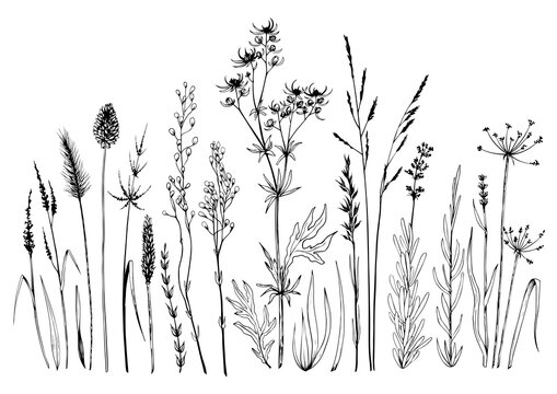 Set of wild meadow herbs and flowers.