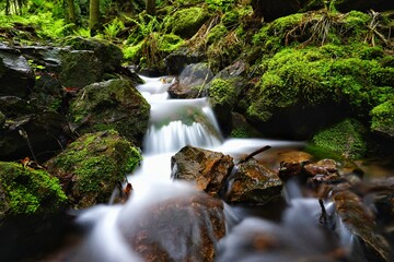 Long-term Shot Of A Stream In The Thuringian Forest