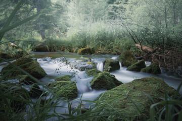 Tuinposter Bos rivier Wild Creek Flowing Peacfully Trough The Forest. Schwarzwald, Germany. Longexposure.
