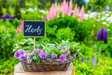 Fresh herbs in a gardener's basket.