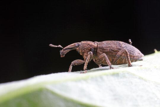 weevils inhabit nature