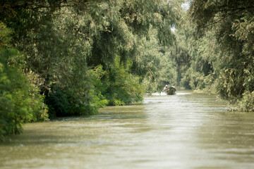 Channel landscape with waves in Danube Delta,  Romania,  on summer day Fototapete