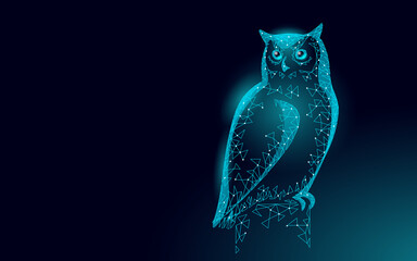 Owl bird symbol of wise education. E-learning distance concept. Graduate certificate program concept. Low poly 3D internet education course degree vector illustration