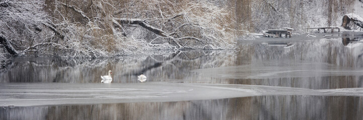 Two swans on a frozen river