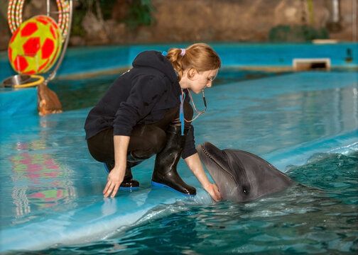dolphin trainers train in the pool