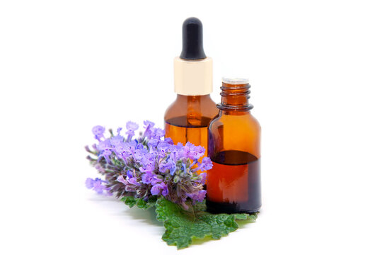 Faassen catnip essential oil and extract in a bottles with leaf and flowers on  white