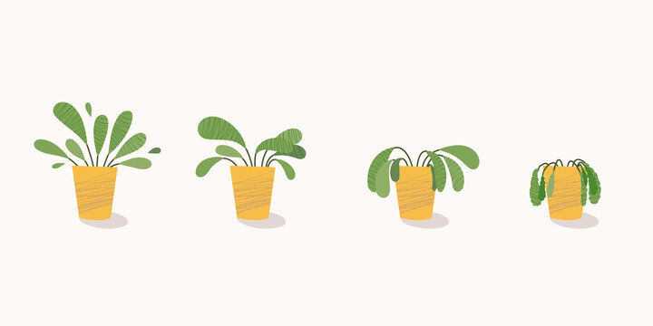 Stages of withering, a wilted plant in a pot, abandoned houseplant without watering and care. Potted plant dying. Vector illustration
