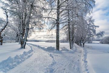 Obraz Bare Trees On Snow Covered Field Against Sky - fototapety do salonu