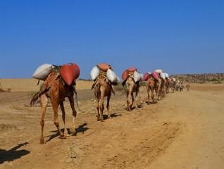 Tuinposter Kameel camels in the desert