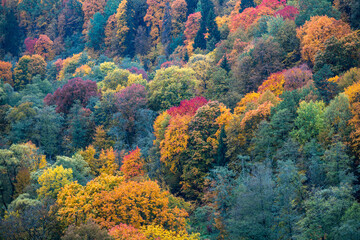 High Angle View Of Trees In Forest During Autumn - fototapety na wymiar