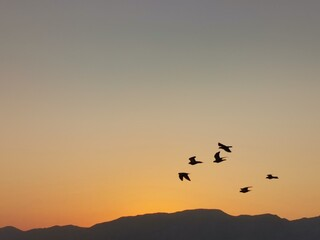 Foto op Canvas Vogel Silhouette Birds Flying In Sky During Sunset
