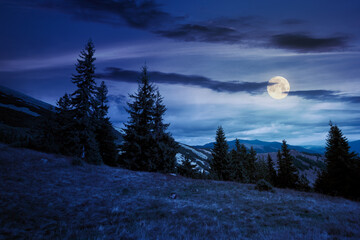 spruce forest on the hillside meadow at night. colorful grass in autumn. hills rolling in to the distance in full moon light. cloudy day