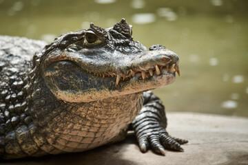 Papiers peints Crocodile Close-up Of Crocodile At Lakeshore