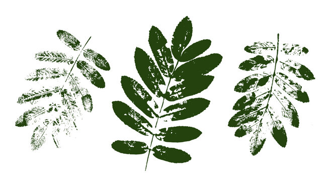 Vector rowan leaf print.  Set with stamp leaves. Hand drawn floral elements for your design