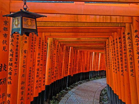 Torri Gates and Lantern in Kyoto