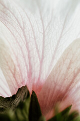 detail of a flower petal