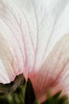 detail of a flower petal