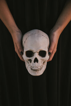 Close up of a skull in hands