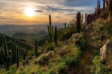 Photo sur Aluminium Arizona Cactus Growing On Field Against Sky During Sunset