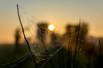 Cool beautiful photo of cobweb with dew drops