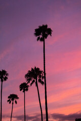 Wall Murals Candy pink Palm Trees At Sunset