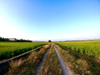 Fotomurales - Scenic View Of Agricultural Field Against Sky