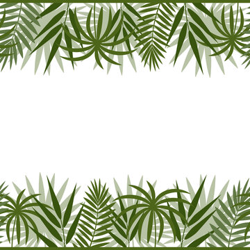 border frame with tropical leaves of monstera, palm and bamboo green on a white background, color vector illustration, design, decoration, print, texture, banner