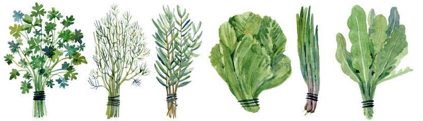 Watercolor collection of fresh herbs and vegetables isolated..