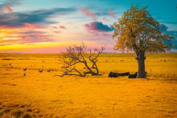 rural scenery in Belarus