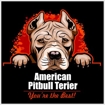 American Pitbull Terrier - Peeking Dogs - breed face head isolated on black