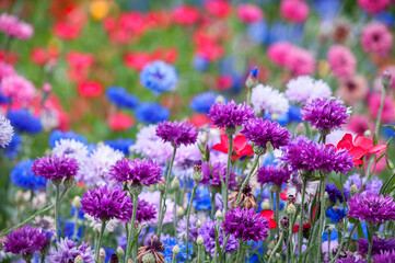 Canvas Prints Floral The Colorful wildflowers