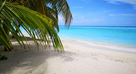 Tropical Maldives beach with coconut palm trees and blue sky. Wall mural