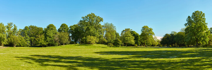 Green meadow in the park with trees and sky in summer