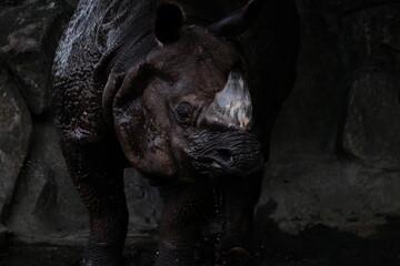 Foto op Canvas Neushoorn Close-up Of Rhinoceros Against Rock At Zoo