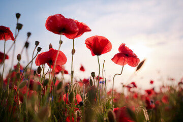 Foto op Canvas Poppy Beautiful summer day. Red poppy field.