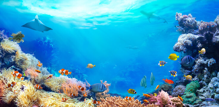 Panoramic view of the coral reef. Animals of the underwater sea world. Ecosystem. Colorful tropical fish.