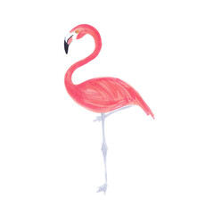 Watercolor illustration of pink flamingo bird on white background. Coral pink. Cute cartoon kids illustration