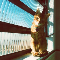 Sun Light Cat