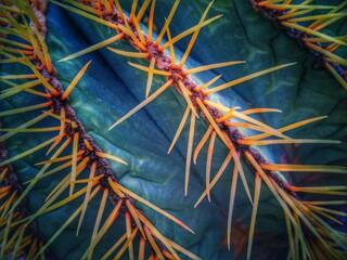 Fotobehang Cactus close up of a cactus