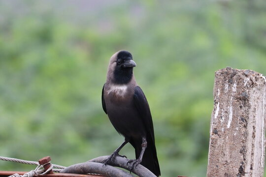 A crow arrives early in the morning sitting on an electric wire
