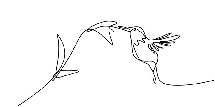 Continuous one line drawing of hummingbird minimalism drawing. Flying bird on flowers isolated on a white background. Avian national zoo park concept. Humming bird isolated vector illustration