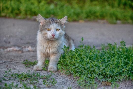 stray dirty cat